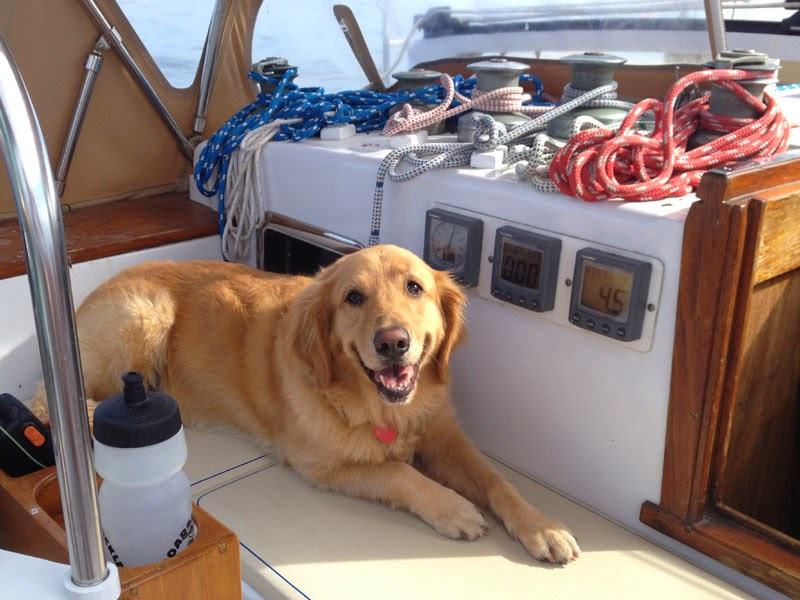 Scout aboard Whispering Jesse in Biscayne Bay