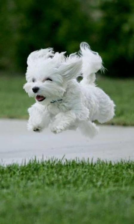 Most Favorite 2 Dog Breeds