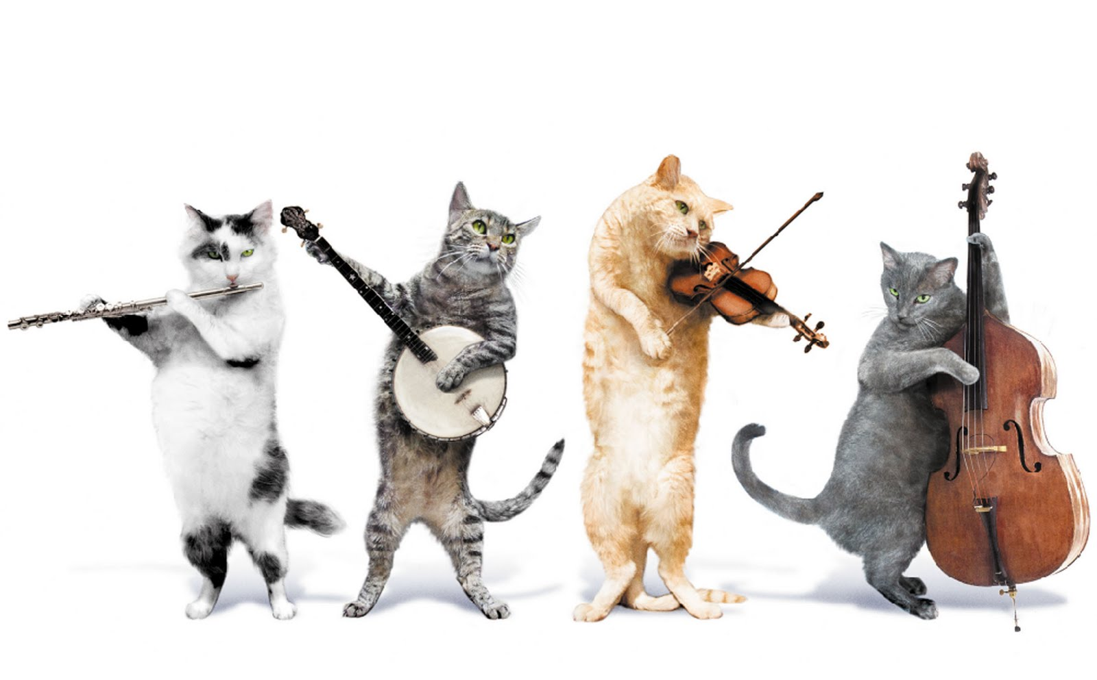 Cats And Dogs Playing Instruments