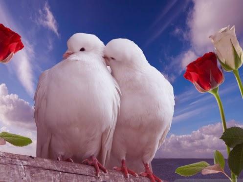 """Résultat de recherche d'images pour """"2 tourtereaux"""""""