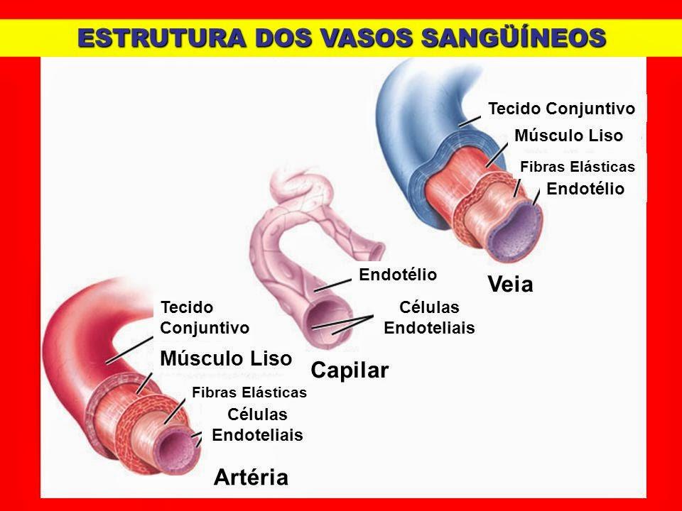 Diferença entre artérias e veias