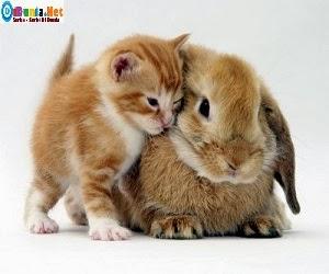 hewan terunik didunia