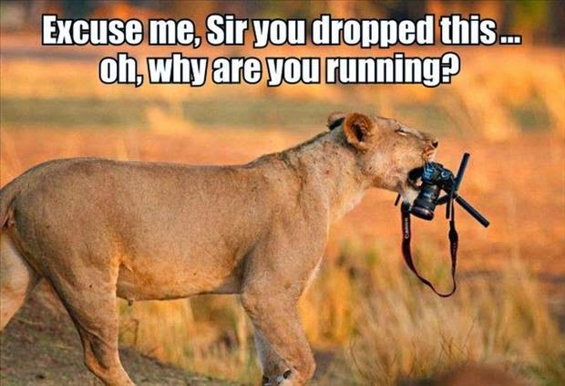 30 Funny animal captions - part 21 (30 pics), captioned animal pictures, lion grabs camera