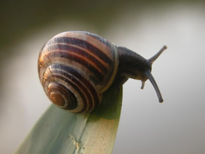 Snail in the farm