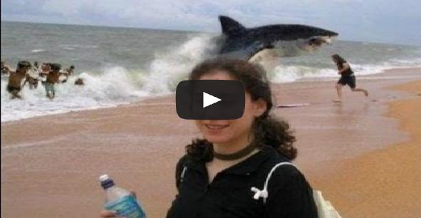 Shark Attack Beaches