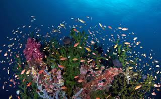 beautiful fish in raja ampat, beautiful coral in raja ampat, underwater raja ampat