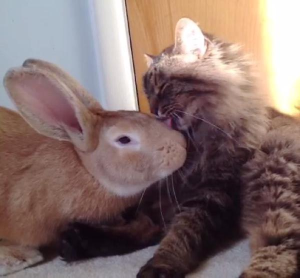 Кошка Бетти и кролик Люк