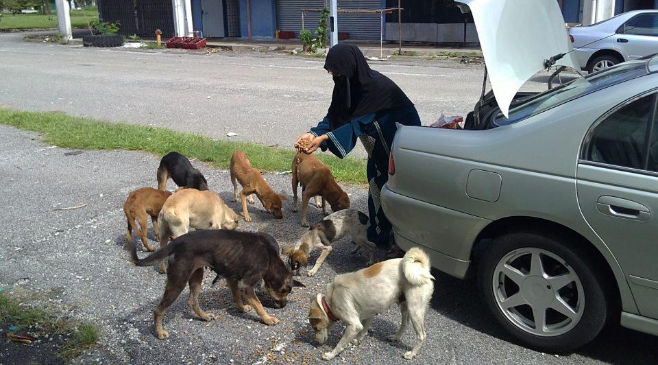 Hasil carian imej untuk beri makan haiwan