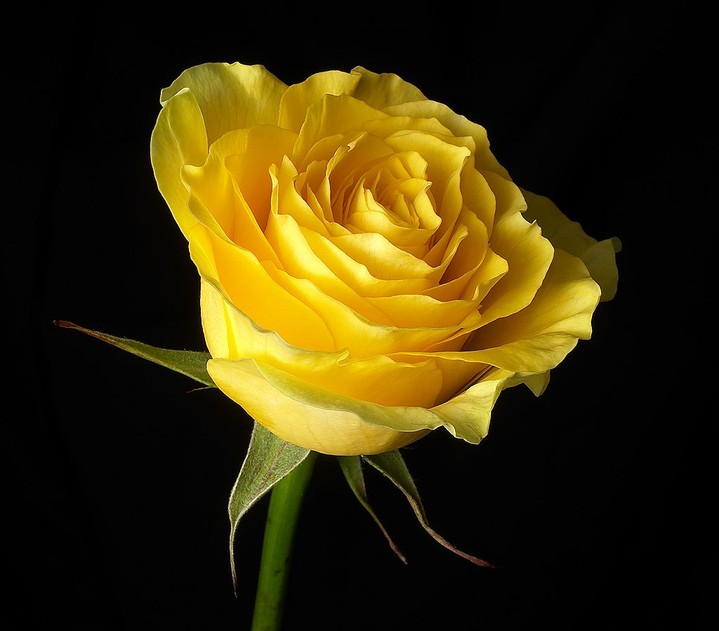 Yellow Color Flowers Wallpapers Bestwall