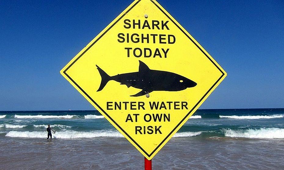 ataques tiburon
