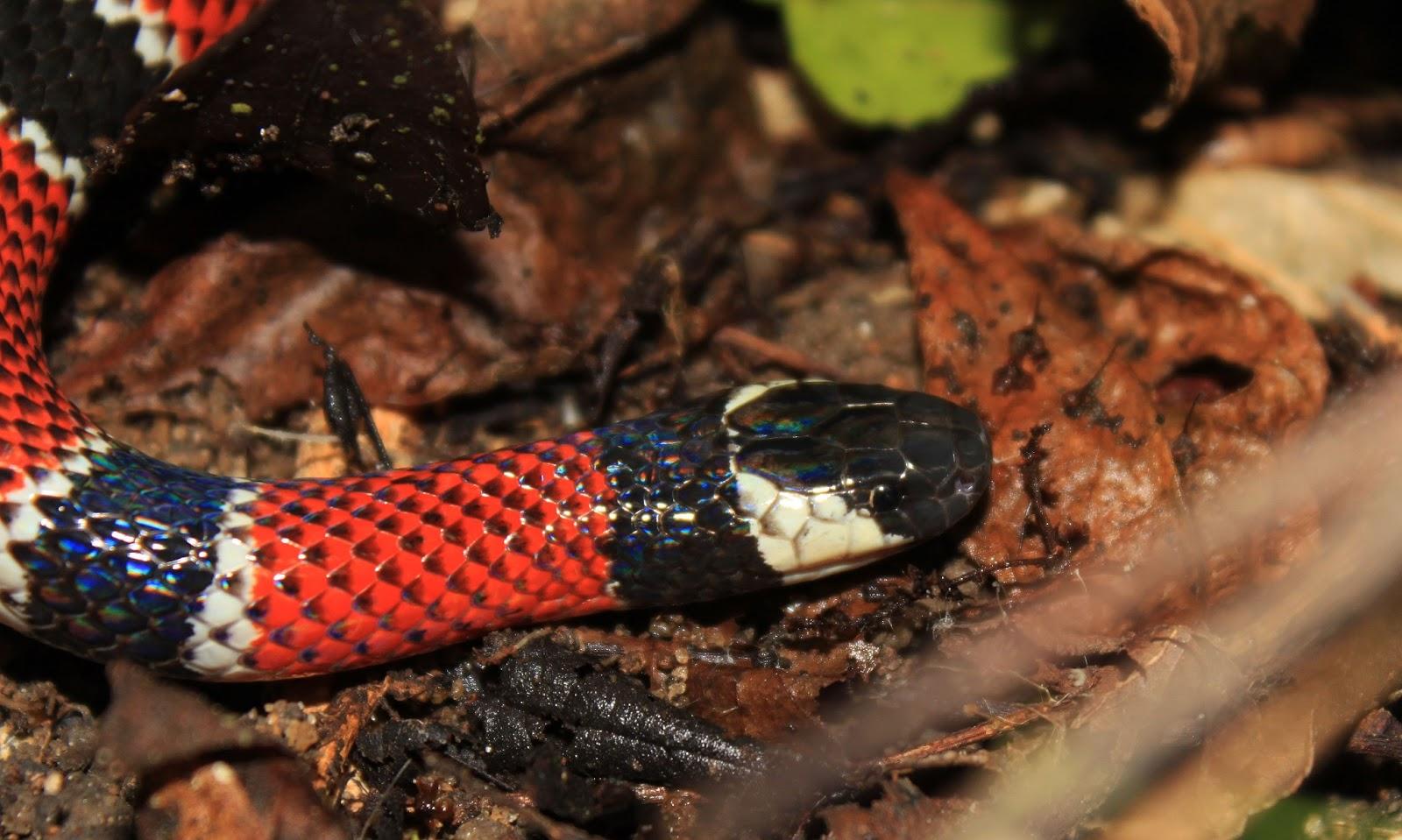 Very Rare Reptiles on People Are Very Rare