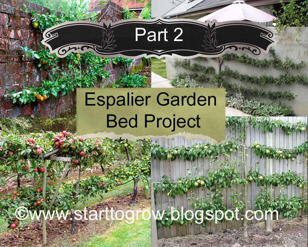 Espalier Garden Bed Project   Part 2