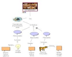 mapa conceptual sobre glucidos