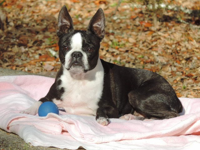 Canine mast cell tumor holistic
