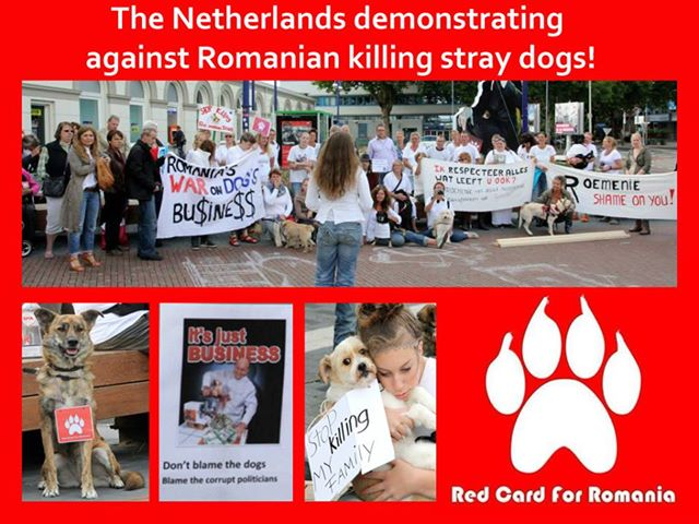 Netherlands protest dogs euthanasia in Romania