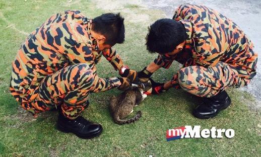 Kucing tersangkut kepalanya dalam tin sardin diselamatkan bomba
