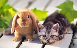 pets cat and rabbit animal picture