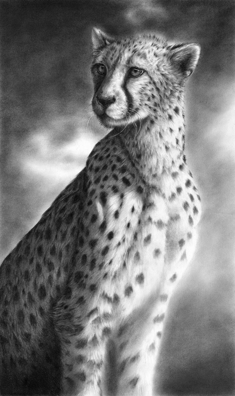 11-Where-There-Is-Light-Hyper-Realistic-Wildlife-Peter-Williams-www-designstack-co