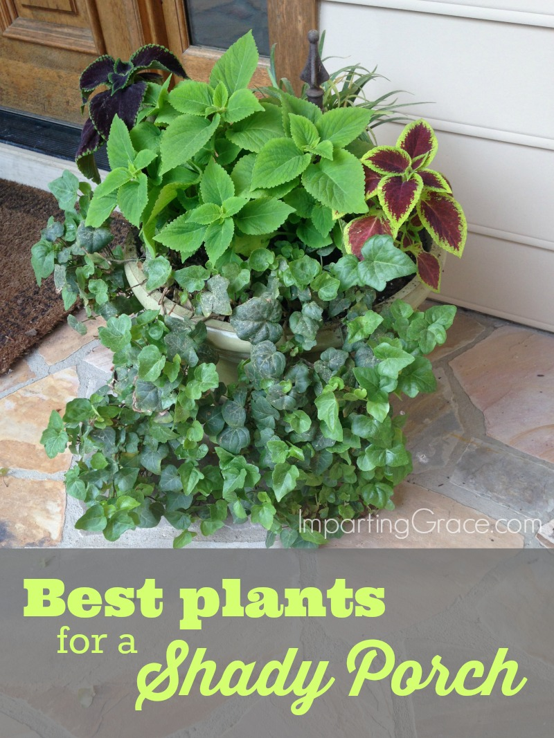 Imparting grace best plants for a shady porch for Easiest outdoor plants