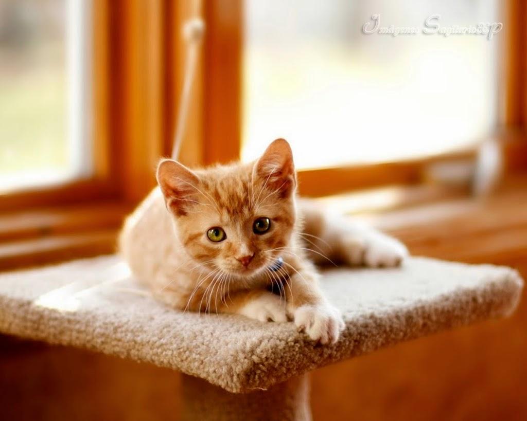 gatito-rallado-amarillo.jpg