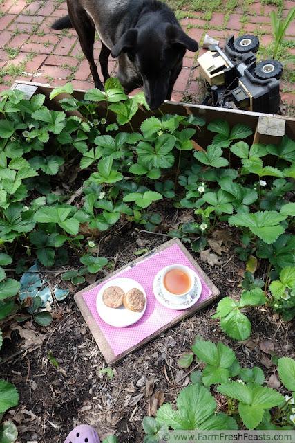 http://www.farmfreshfeasts.com/2013/06/strawberry-sour-cream-brown-sugar.html