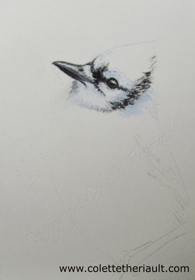Blue Jay bird painting on the easel, work in progress by Colette Theriault