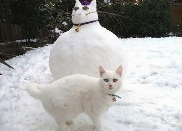 А вот кошка новому другу, судя по всему, не рада
