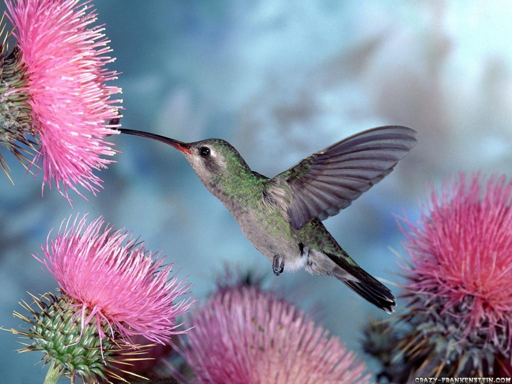 Amazing wild life photography birds desktop wallpapers