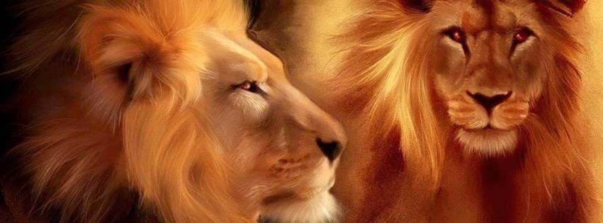 Animal lions facebook cover wallpaper photo image
