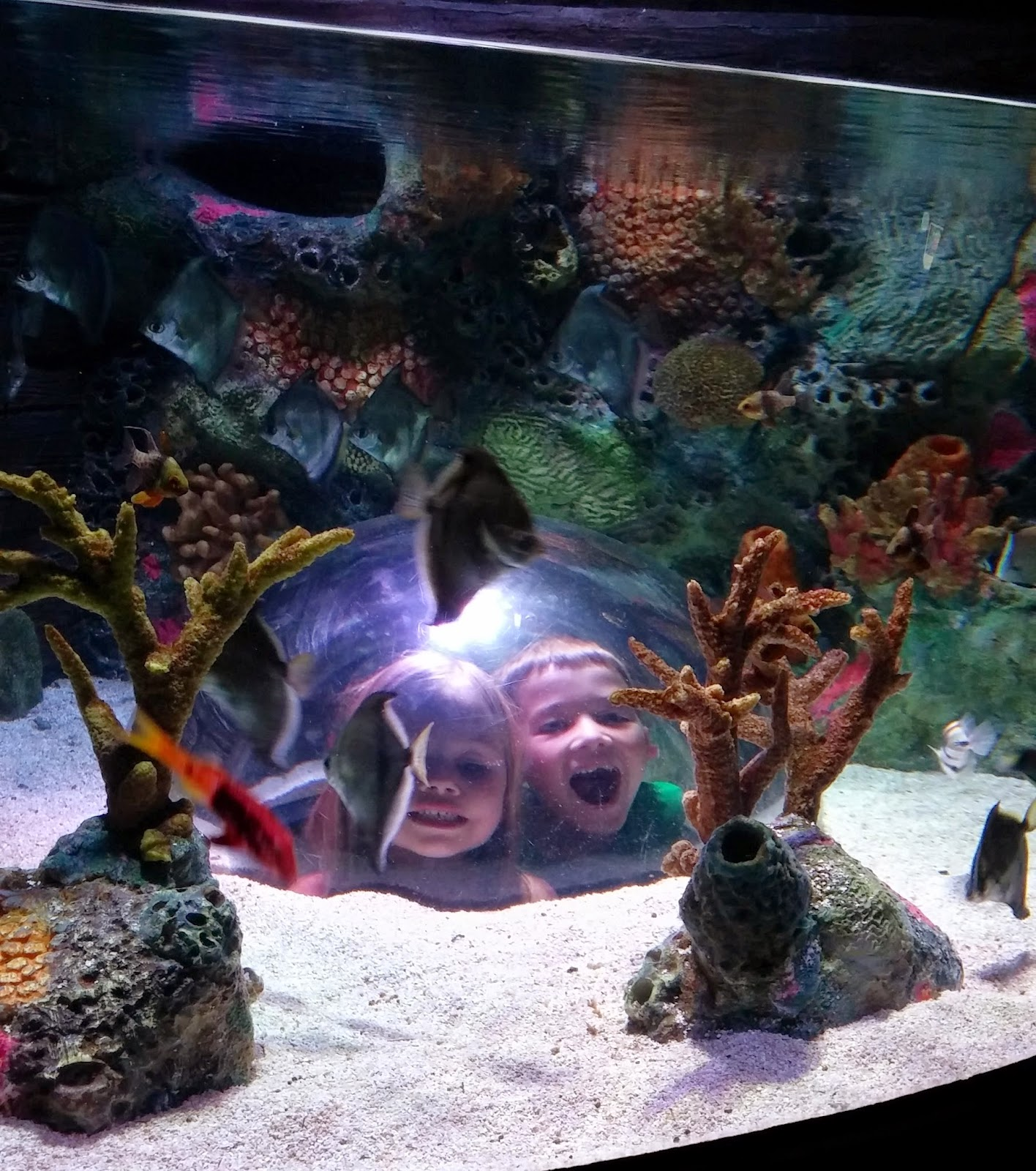 Freshwater fish kansas city - Sea Life Kansas City Aquarium Will Transport You Into The Amazing Underwater World Come Nose To Nose With Sharks And Prepare For Astonishingly Close Views