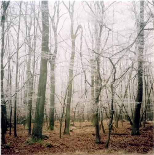 Wald Hunsrück Fotografie