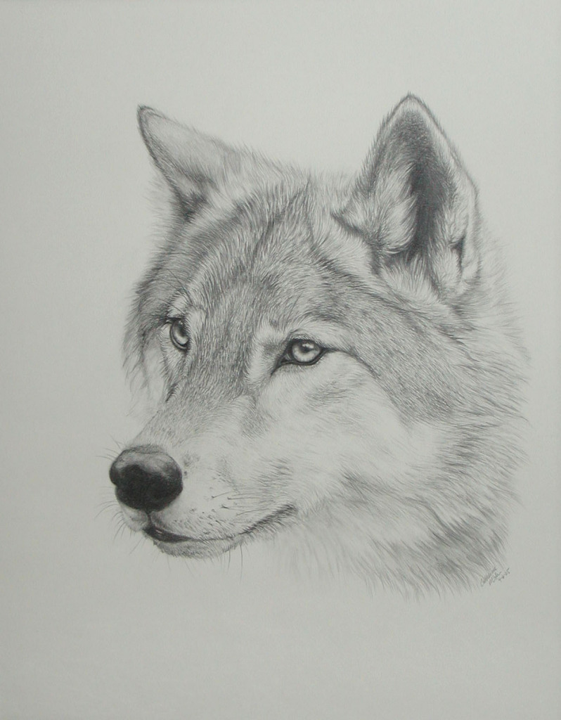 Best 25 Wolf drawings ideas on Pinterest  Wolf painting