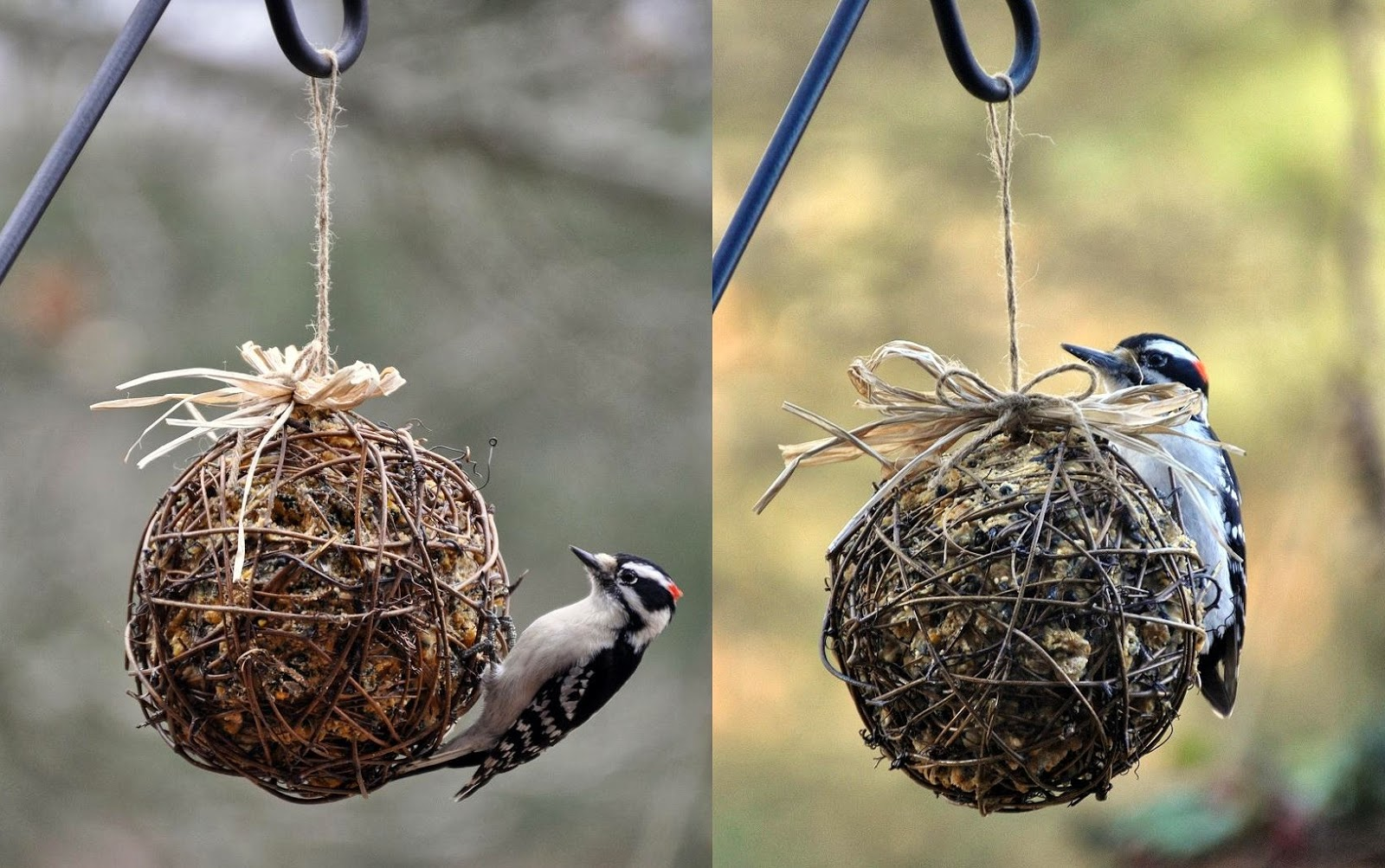 The garden roof coop diy suet feeders male downy and male hairy woodpeckers they are lookalikes until theyre side by side solutioingenieria Image collections