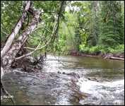 My Bulkley River