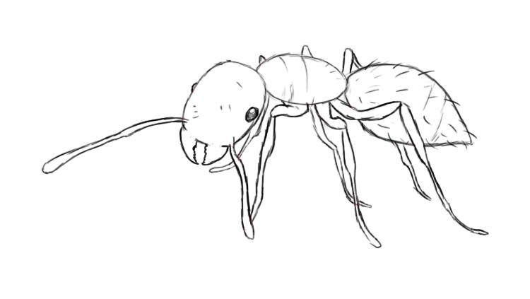 at this point your ant is pretty much completely drawn all that is left to do is to add a few lines that run around each segment of the ants body