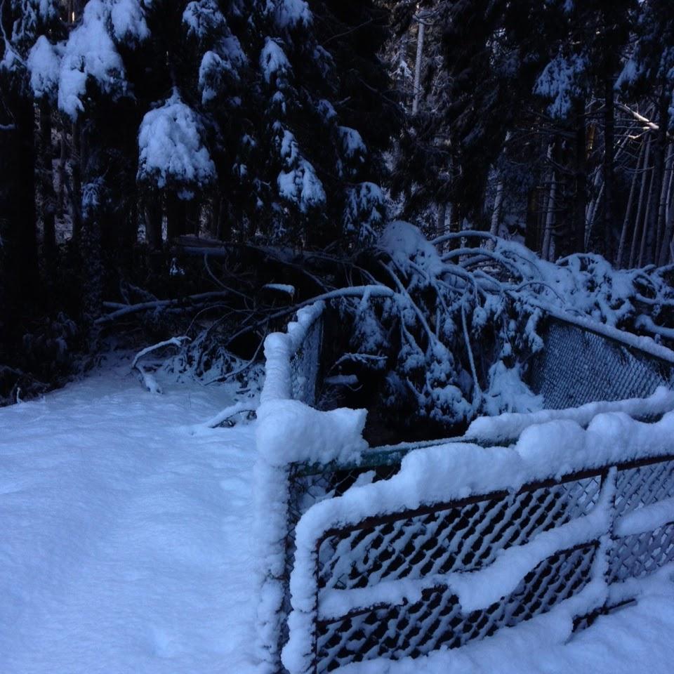 雪で折れたビニールハウス