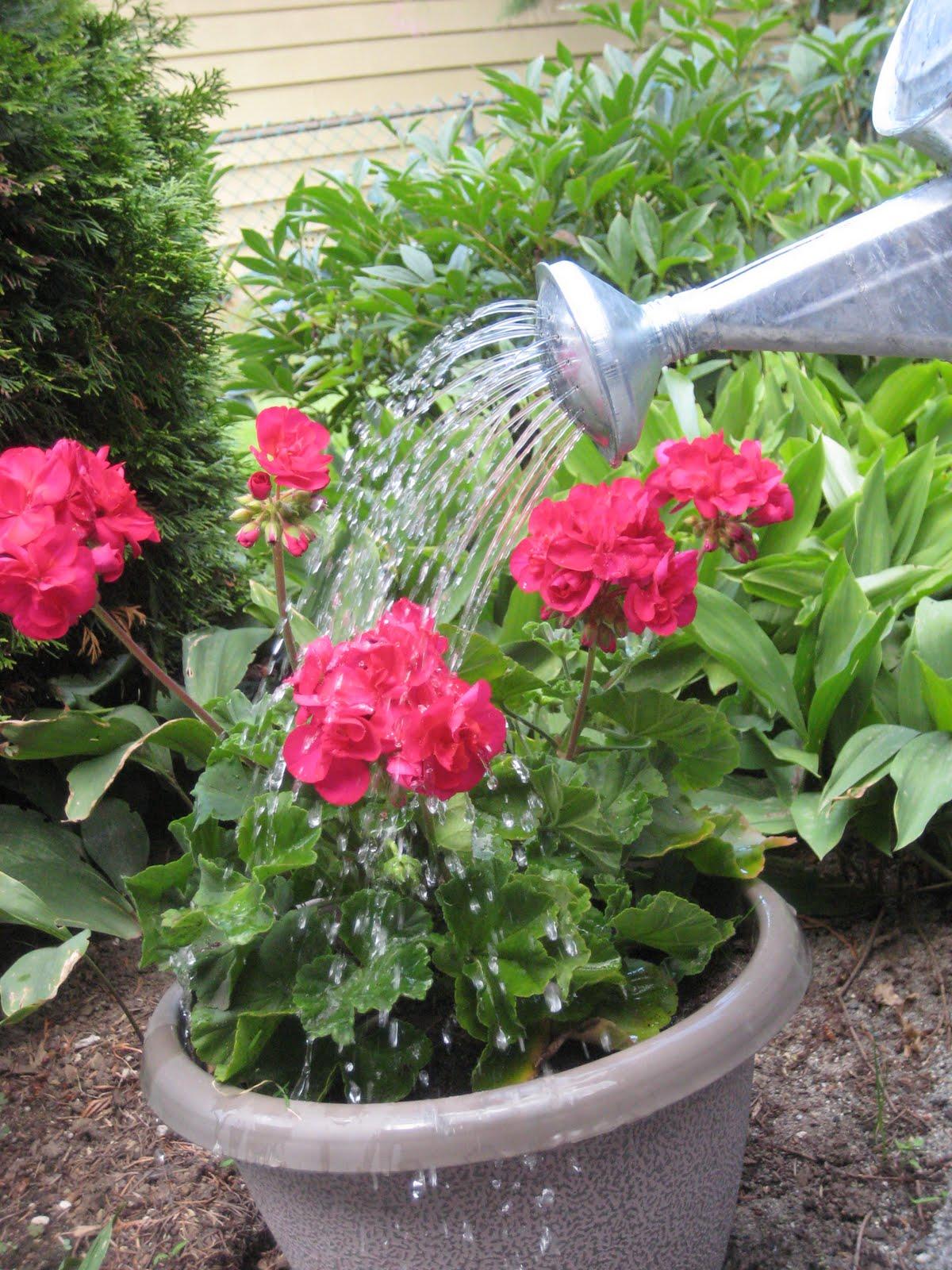 Vista Woman Simple Pleasure Watering Can