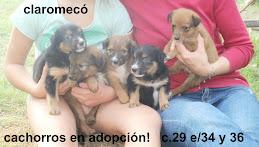 cachorros en adopción! ADOPTADOS!