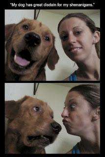funny dog, unamused dog, dog has disdain