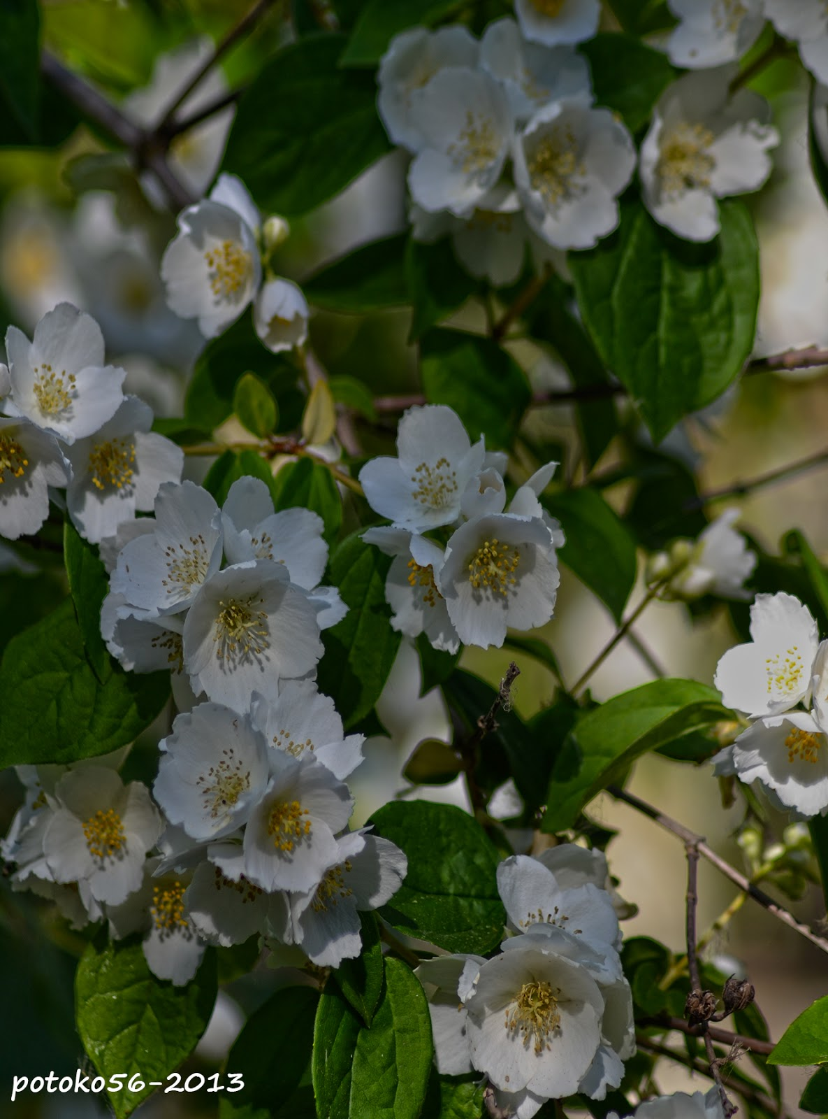 Arbol en flor Jardin Botánico Rota