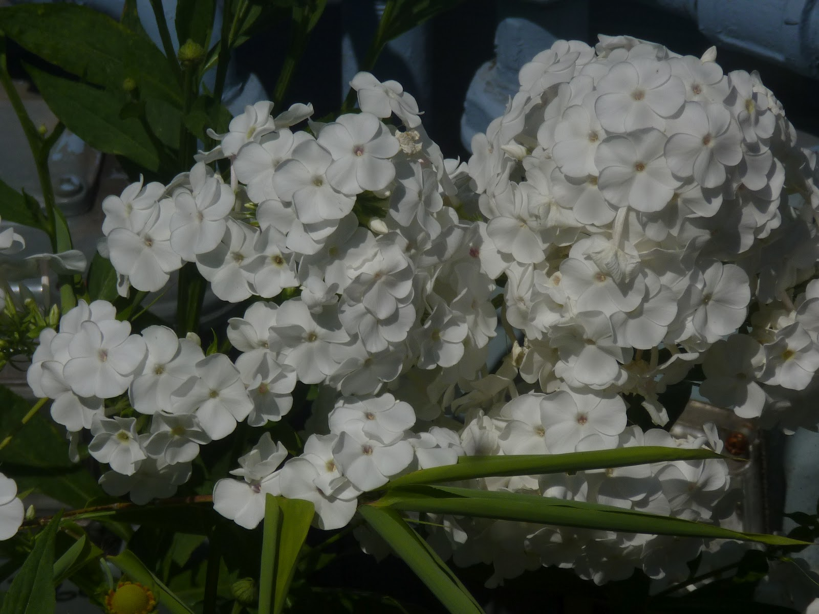White Flowers Names List With Pictures Find This Pin And More On