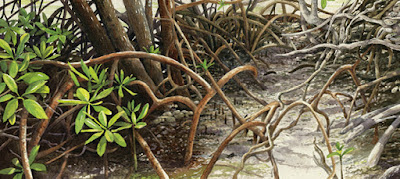 """In the Mangroves"" limited edition giclee print"