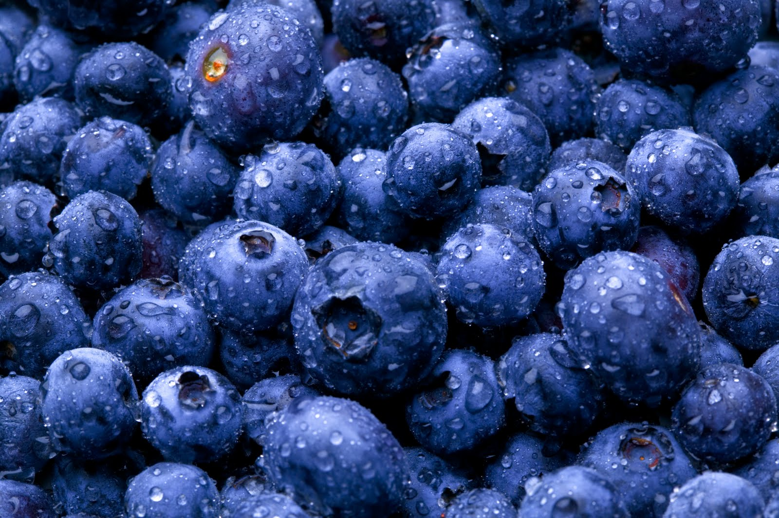 Indigo Roth presents Blueberries in America