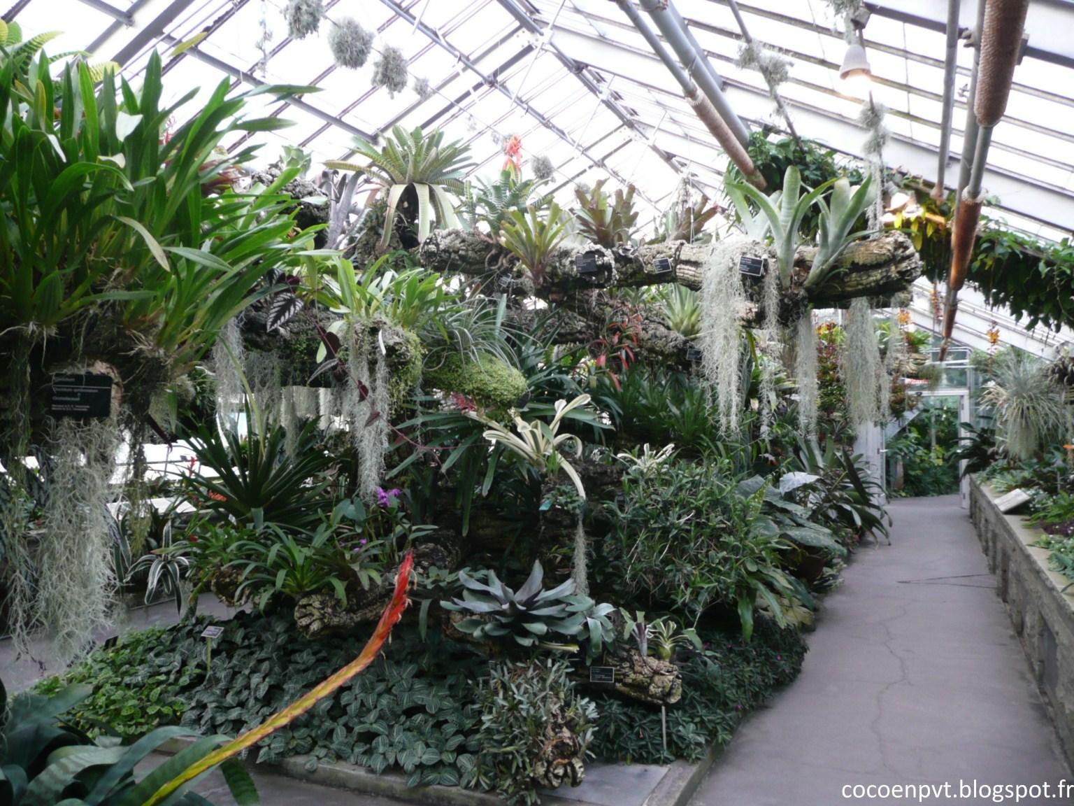 Coco en pvt les serres du jardin botanique for Bd du jardin botanique 50