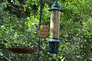 suet and bird bath