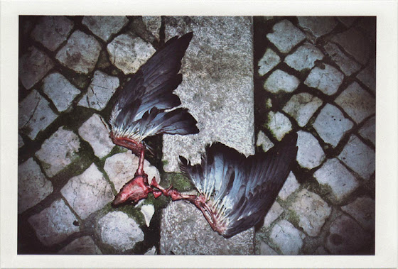 dirty photos - noah's ark fauna photo of dead bird's eaten wings
