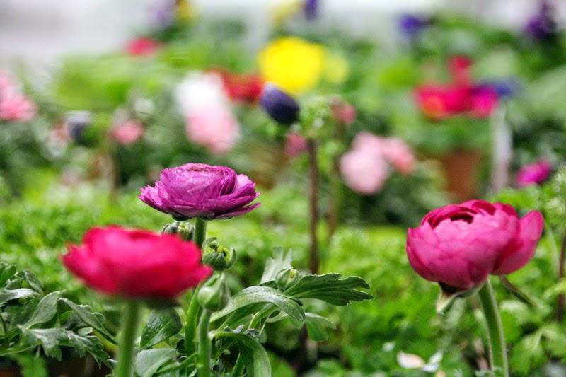 Atelier de jardinage urbain