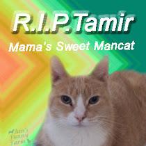 Run Free Tamir