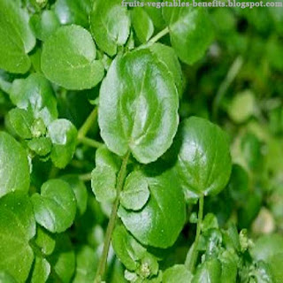 benefits_of_eating_watercress_fruits-vegetables-benefits.blogspot.com(11)