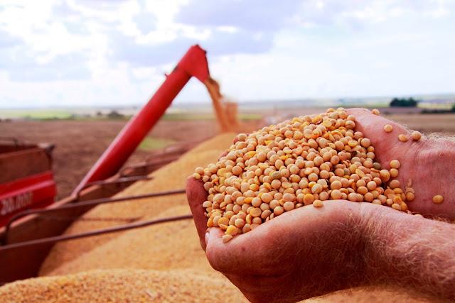 produção de soja deve aumentar mais de 15%